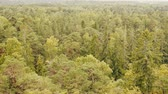 kereste : Pure coniferous forest,  boreal coniferous forest, taiga, top view and side view Stok Video