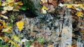 pó : Forest Wellspring of crystal clear water in autumn day. On surface of water whirling yellow leaves, maple leaf, oak leaf