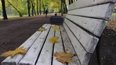 bank : Falling leaves and gardener was covering garden alley. Autumn in city Park in yellow leaves. Yellow maple leaves on garden bench, sad mood of past summer Stok Video