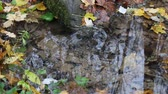 shortage : Forest Wellspring of crystal clear water in autumn day. On surface of water whirling yellow leaves, maple leaf, oak leaf