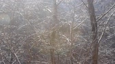 vinha : Blowing in wind. Wind blows wet snow from tree branches. Snowfall and subsequent thaw, dripping. Shooting in contour