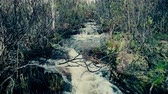 tableland : Quick taiga river on the border of Norway and Russia Stock Footage