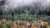 boreal : Fog coming down from mountains on quiet forest lake. Deciduous and coniferous forest, shrubs with green buds, early spring, serene landscape