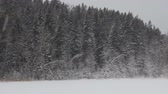 wintertime : snowy forest with a lake and snow. snowflakes swirl winter day
