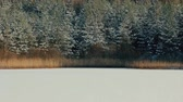 chilly : Smooth layer of snow on frozen forest lake. Pine forest covered with snow and sunlit. Earth watching, marks of beginning of winter, natural history