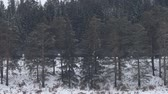 ton : freight train moving through coniferous forest during snowfall. Northern country. Side view