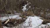 waterworks : Beavers live under ice in winter, beavers house height 2 meters. Beavers have built dam, raised water level in river, after ice formation drain off water