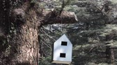 brute : Birdhouse for birds and squirrels. White birdhouse in forest of Himalayan firs Stock Footage