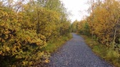 boreal : road through autumn woods for a walk and enjoying silence. early autumn in North