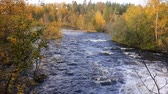 skandynawia : Autumn forest on banks of turbulent North river. River landscape in green and yellow tones. Lapland