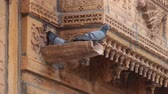 приукрашивание : Rock dove are caring for a female in the rain sink a wonderful old balconies with carved stone (glyptic). The worlds oldest Indian culture continues to live its millennial life. Indian architecture