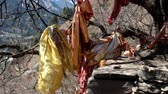 bo : Red shiny cloths on the sacred tree in the Himalayas. India