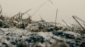 manto : Beginning of winter. The first snow (early snow) falls on the autumn ground covered with dry herbs. The camera on the ground. Super slow motion 1000 fps