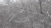 고드름 : Tree branch covered with ice, silver thaw. Natural disaster in form of ice rain came to southern region of Eastern Europe. Beautiful full-scale glaciation all around, silver thaw