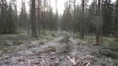 sektör : Improvement cutting in the natural pine forest. Natural forest suffers from economic activity, timber industry. Cleared forest reduces biodiversity