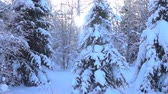 snow mantle : snow-covered trees and falling snow caps on snowbreak day near the forest hut. Super slow motion 1000 fps, in contour Stock Footage