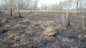 montículo : Land after fire consequences: dry ground, tree roots and bushes are burnt and devastated. Young grass is growing and there are molehills in the meadow. The Dnieper river appears in the background. Vídeos