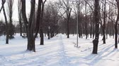 obrazy : 4K screen shot of a park alley with the sledge trace between trees Dostupné videozáznamy