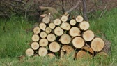 резать : 4K Close up shot Stack of wood logs in the middle of the field