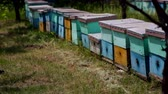 coletar : HD Honey Bee flying around Beehives in the field