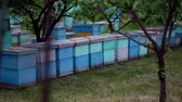 hornets : HD general plan of the beehives view from back Stock Footage