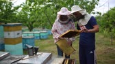 opylení : HD Beekeepers hold a frame of honeycomb
