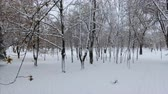 4K Panoramic crone shot of the winter park at the low altitude. The tree corridor