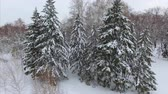 4K The drone shot of fir covered with snow Stock Footage