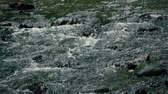balvan : Slow motion footage. Flowing water over stones in mountines river Dostupné videozáznamy