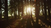 солнечные лучи : Shot going upward of sun coming through trees in a forest