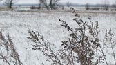 não urbano : dry grass field in snow winter nature landscape