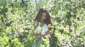 bloom : Girl and blooming cherry. The girl is lifestyle standing in nature blossoming garden cherry Stock Footage