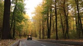 stabilizer : Asphalt road in the autumn forest, with yellow and green trees