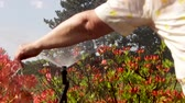 waterhose : Clever garden with a fully automatic irrigation system, water azaleas.