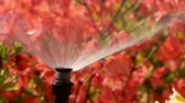 waterplant : Clever garden with a fully automatic irrigation system, water azaleas.