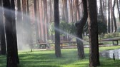 gramíneo : automatic sprinkler system watering the lawn on a background of green grass