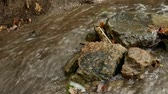 watercourse : Pure freshwater stream in the deciduous forest in autumn. Mountain Creek with stones and rocks. Stones and rocks along water stream flowing through autumn forest