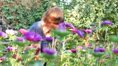retailer : Florist cutting purple or violet michaelmas daisy or aster flower at gardens greenhouse for flower shop outdoor Stock Footage