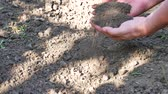 ültetés : Gardener hands preparing soil for seedling in ground. Agriculture, gardening or ecology concept