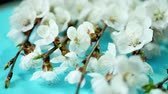 Spring background with white blossom. Flower with pistils and stamens Стоковые видеозаписи