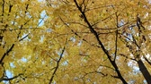 říjen : Autumn tree leaves sky background. Golden autumn scene in a park, with falling leaves