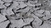 scarcity : Water drops fall on dry fractured soil of drought. Concept of drought, ecology catastrophe, climate change or death without moisture