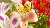 Лилли : Flowers bouquet with red, pink and white lilies arrange for decoration in home