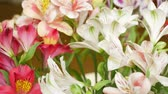 Лилли : Flowers bouquet with red, pink and white lilies and green leaves in flower shop Стоковые видеозаписи