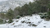 Snow falling on pine tree forest at Biokovo mountain motion view Vídeos