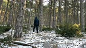 Young man with hood on head walking on frozen ground in pine tree forest slow motion Vídeos