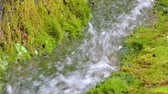 pedregulhos : Beautiful mountain creek stream waterfall river flowing in green summer forest