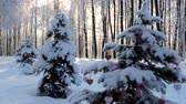 Snowfall in the forest, fir branch with a Christmas toy sways in the wind
