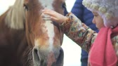 náhubek : A little girl is stroking the horse in the face. Close-up, slow-motion