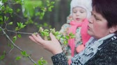 meia idade : A middle-aged woman and a little girl are looking at a flowering tree Stock Footage